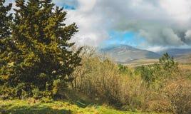 O verão ensolarado bonito da montanha e da floresta de Crimeia ajardina Imagens de Stock