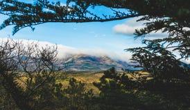 O verão ensolarado bonito da montanha e da floresta de Crimeia ajardina Fotografia de Stock Royalty Free