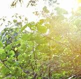 O verde é sempre cores naturais com por do sol bonito em minha exploração agrícola Fotografia de Stock Royalty Free
