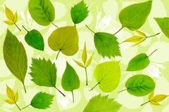 O verde abstrato deixa o fundo Ilustração Stock