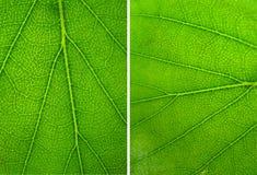 O verde abstrato deixa a textura fotografia de stock royalty free