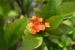 O verde alaranjado da flor sae de plantas Fotos de Stock