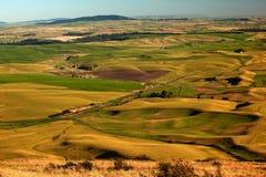 O verde amarelo das explorações agrícolas coloca Palouse Washington fotografia de stock royalty free