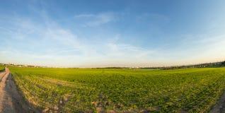 O verde arquivou no campo na noite do verão fotografia de stock royalty free