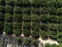 O verde cobre árvores alaranjadas em seguido spain fotografia de stock