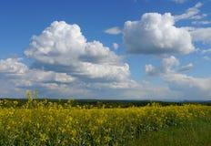 O verde coloca a floresta Alemanha das plantas da natureza do sol do verão Fotos de Stock
