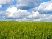 O verde coloca a floresta Alemanha das plantas da natureza do sol do verão Imagem de Stock