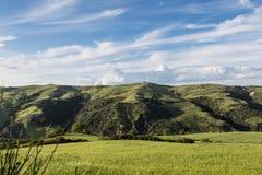 O verde coloca o trigo Basilicata - Itália Fotos de Stock Royalty Free
