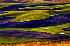O verde coloca testes padrões de terra pretos Palouse Imagem de Stock Royalty Free