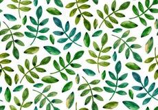 O verde da aquarela deixa o teste padrão Fotografia de Stock Royalty Free