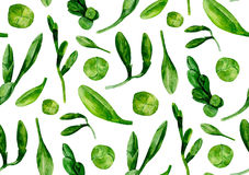 O verde da aquarela deixa o teste padrão Imagens de Stock Royalty Free