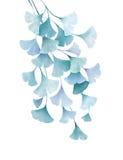O verde da aquarela do biloba da nogueira-do-Japão deixa o desenho floral isolado no fundo branco Fotografia de Stock Royalty Free