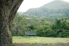 O verde da natureza da floresta e da montanha ajardina com a uma cadeira para relaxa Fotografia de Stock