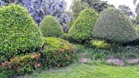O verde das plantas de jardim Fotos de Stock Royalty Free