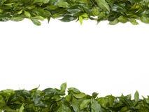 O verde deixa a beira Fotos de Stock Royalty Free