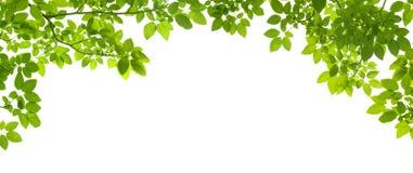 O verde deixa a beira Fotografia de Stock Royalty Free