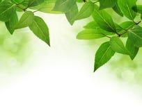 O verde deixa a beira Fotografia de Stock