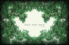 O verde deixa a beira do preto do vintage do estilo do frame Fotografia de Stock Royalty Free
