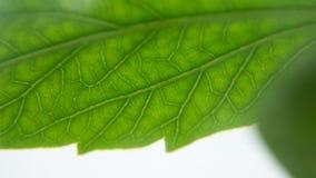 O verde deixa o close-up das plantas da casa no macro com a textura fotografia de stock