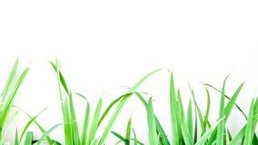 O verde deixa o frame Imagens de Stock Royalty Free