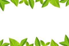 O verde deixa o frame isolado no fundo branco Imagem de Stock Royalty Free