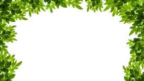 O verde deixa o frame isolado no fundo branco Fotos de Stock Royalty Free