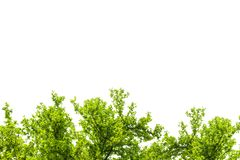 O verde deixa o frame isolado no fundo branco Foto de Stock Royalty Free