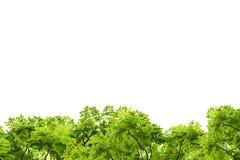 O verde deixa o frame isolado no fundo branco Foto de Stock