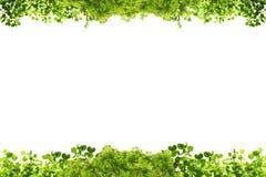O verde deixa o frame isolado no fundo branco Fotos de Stock