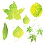 O verde deixa ilustrações pela pintura da aquarela Fotografia de Stock
