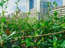 O verde deixa o close up em um parque exterior com a torre do negócio Imagem de Stock Royalty Free