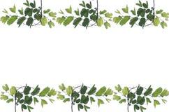 O verde deixa o frame Foto de Stock Royalty Free