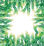 O verde deixa o frame Fotografia de Stock