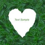 O verde deixa o frame com o coração da forma do espaço Fotografia de Stock Royalty Free