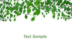 O verde deixa o frame com o espaço para a mensagem Fotos de Stock