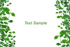O verde deixa o frame com o espaço para a mensagem Foto de Stock Royalty Free