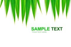O verde deixa o frame isolado Fotos de Stock Royalty Free