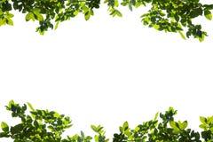 O verde deixa o frame isolado no fundo branco Imagens de Stock Royalty Free