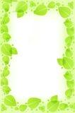 O verde deixa o fundo Foto de Stock
