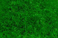 O verde deixa o fundo Imagem de Stock