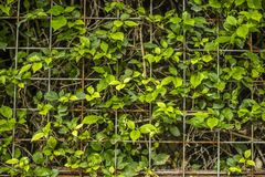 O verde deixa o fundo fotografia de stock royalty free