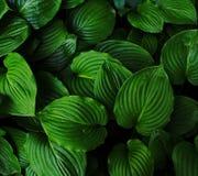 O verde deixa o fundo Imagens de Stock Royalty Free