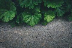 O verde deixa o fundo Fotografia de Stock