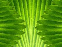 O verde deixa o fundo abstrato Imagens de Stock Royalty Free