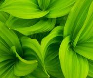 O verde deixa o fundo abstrato Fotos de Stock