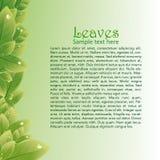 O verde deixa o fundo abstrato para folhetos Fotografia de Stock