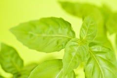 O verde deixa o fundo amarelo abstrato Imagem de Stock