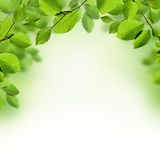 O verde deixa o fundo da beira Imagem de Stock Royalty Free