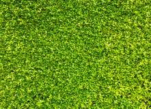O verde deixa o fundo da parede Fotografia de Stock