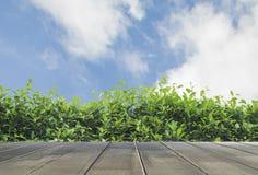 O verde deixa o fundo da parede Imagem de Stock